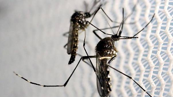 Zika coloca EUA em alerta máximo
