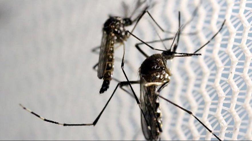Zika virus spreads to Miami Beach