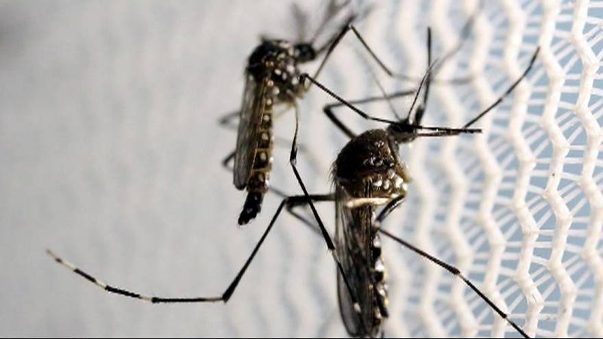 Miami'de zika korkusu