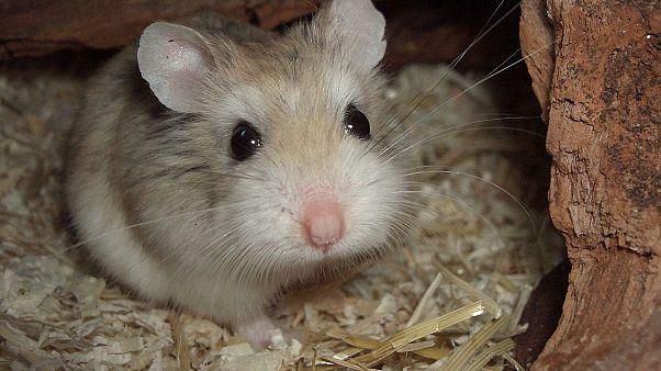 Einige der besten Tweets: #Hamsterkäufe - Regierung erntet Lacher und Kritik