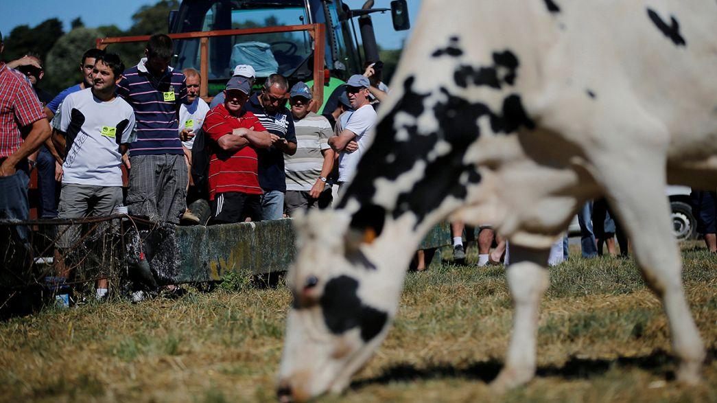 إشكاليات اتفاقية حصص إنتاج الحليب الأوروبية