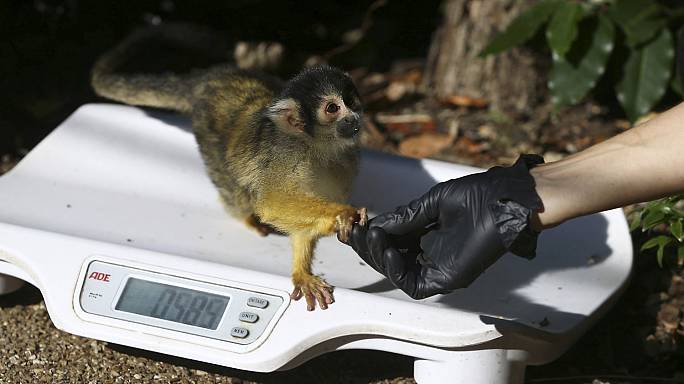 Don't be shy! Animals lured onto scales for annual weigh-in at London Zoo