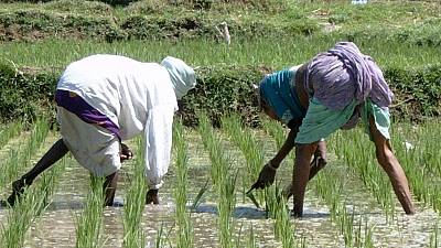 Road to Senegal's rice self-sufficiency