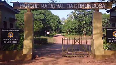 Renewed conflict threatens Mozambique's Gorongosa park