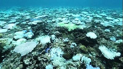Японія: найсильніше за останні 20 років знебарвлення коралів