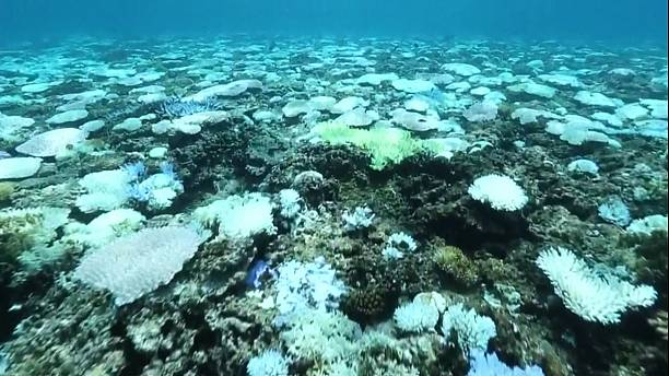 Coral bleaching in Japan the worst in 20 years, say scientists