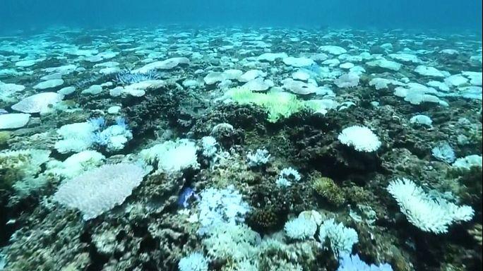 Japon : le blanchiment des coraux s'aggrave vers les îles Okinawa