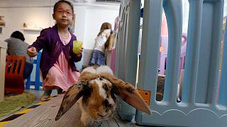 В Гонконге открылось кроличье кафе