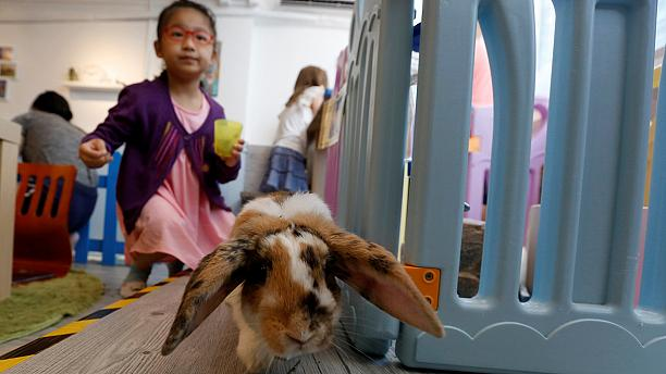 Hong Kong's first 'rabbit café' opens its doors