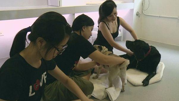 Тайвань: человек собаке массажист