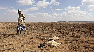 Comment l'Afrique peut lutter contre El Niño en 7 points