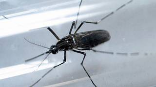 Guiné Bissau: Casos de Zika com estirpe diferente dos encontrados no Brasil
