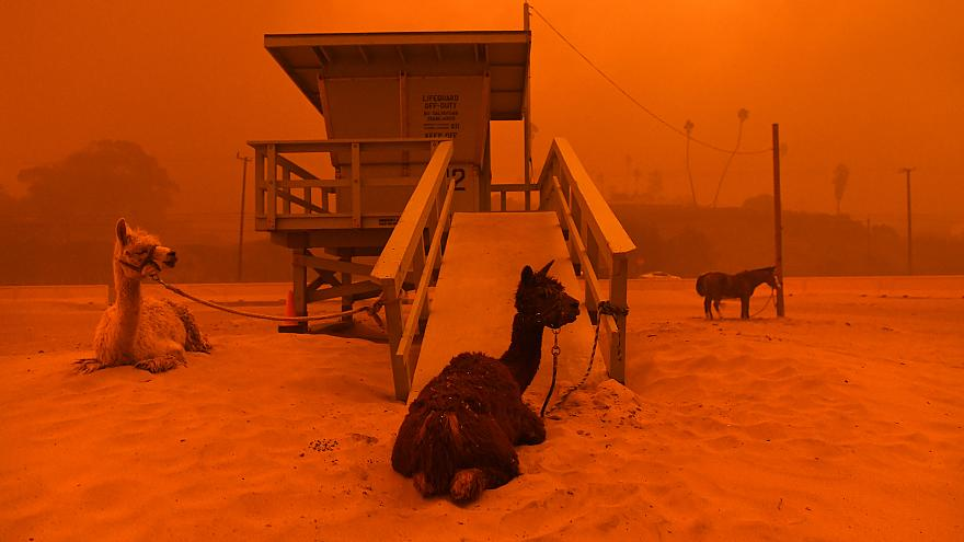 Fast-Spreading Hill and Woolsey Fires Force Evacuations In California's Ven