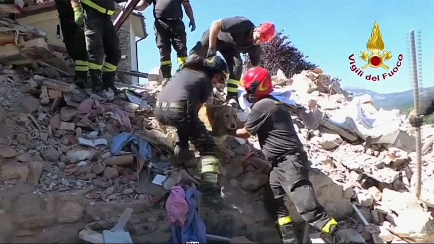 Italy quake: Romeo the dog rescued from the rubble