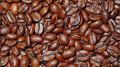 Les perspectives du café camerounais
