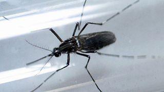 WHO: Sechs Monate geschützten Sex nach Rückkehrer aus Zika-Gebieten
