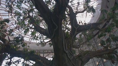 More than a mirage: tropical biodome opens in Dubai
