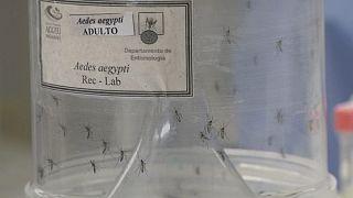 Malaysia meldet erste Zika-Infektion einer Schwangeren