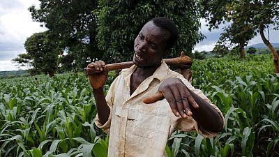Burkina : une web TV pour promouvoir l'agriculture