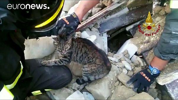 Um gato sob os escombros do terramoto em Itália