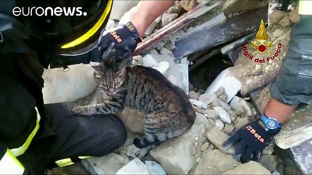 Depremin üzerinden iki hafta geçmişken enkaz altından iki kedi kurtarıldı
