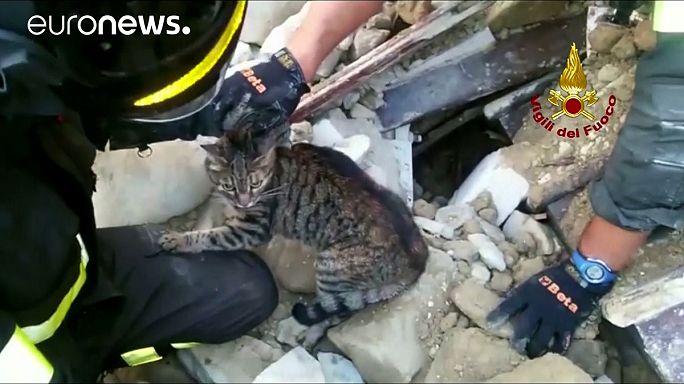 انقاذ قطين من تحت أنقاض الزلزال في إيطاليا