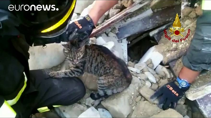 Two cats make the most of their nine lives by surviving the earthquake in central Italy