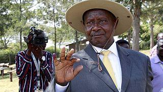 Ouganda : trois hommes arrêtés pour avoir volé des vaches du président Museveni