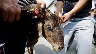 [Photos] Eid-ul-Adha from around the world – prayers, celebrations, sacrifice