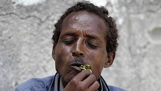 Somalia lifts ban on importation of Kenyan khat after IGAD Summit