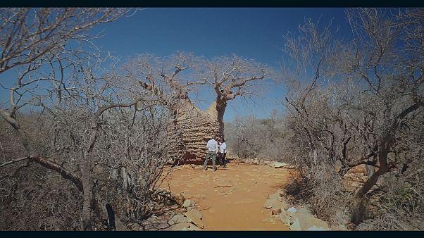 Magagáscar abre os parques nacionais ao Ecoturismo