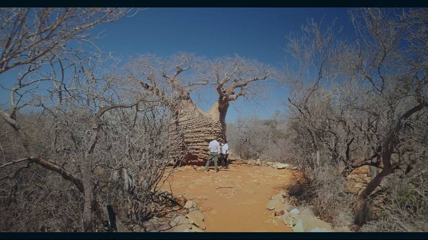 Tesoros de la biodiversidad en Madagascar: Tsimanampetsotsa.