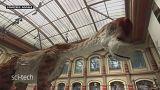 ديناصور زرافي عملاق، يعود إلى الحياة في متحف التاريخ الطبيعي في برلين