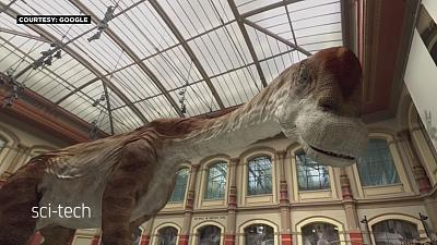 Berlin : un dinosaure reprend vie dans un musée