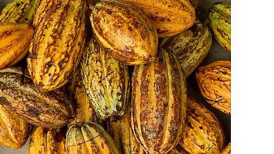 Ghana et Côte d'Ivoire unis contre le travail des enfants dans les cacaoyères