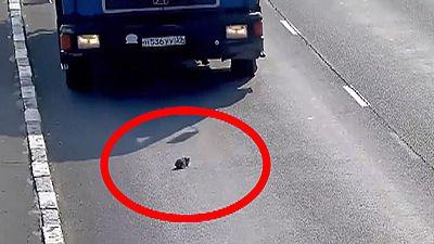 Russie : un petit chaton bien chanceux