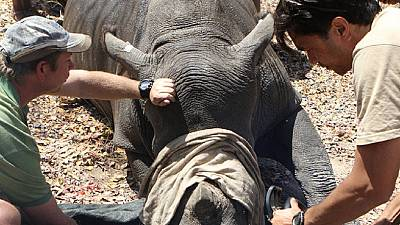 South Africa: Rhino poaching on the decline