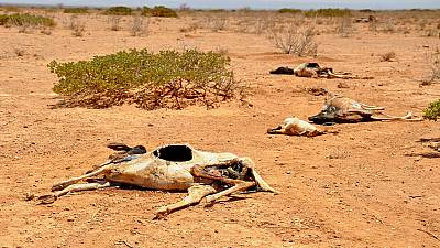 5 million Somalis face food insecurity