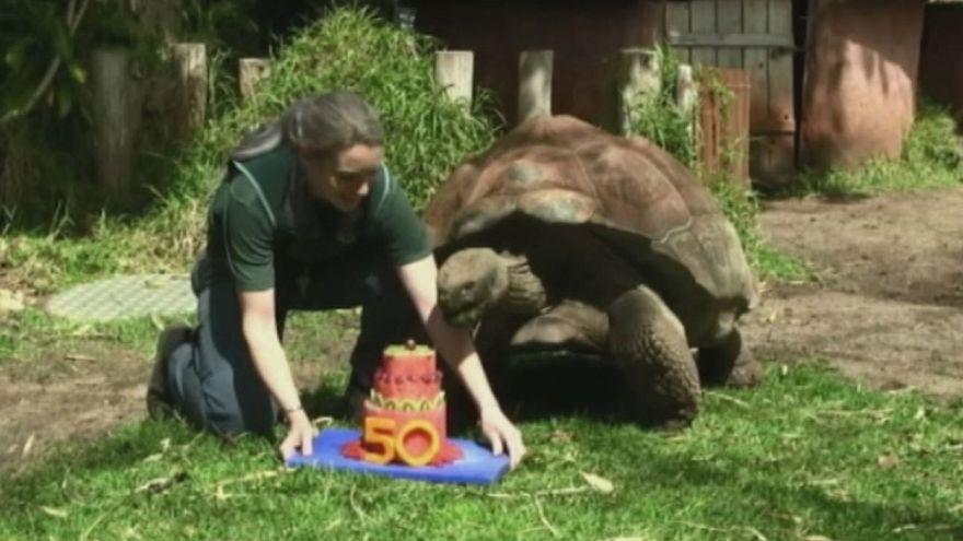 """El zoo de Perth celebra el 50 cumpleaños de la tortuga """"Cerro"""""""