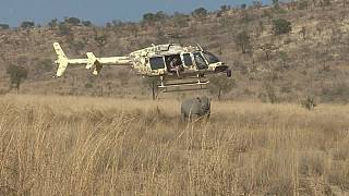 South Africa fights against poaching [no comment]