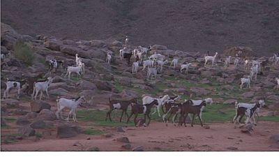 Rift valley fever outbreak in Mali