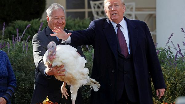 "Image: U.S. President Trump pardons Thanksgiving turkey ""Peas"" during cerem"