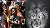 El futuro de elefantes y rinocerontes se decide en Johanesburgo