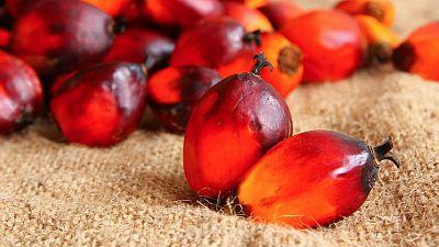 L'UE menace d'interdire l'huile de palme guinéenne sur son territoire