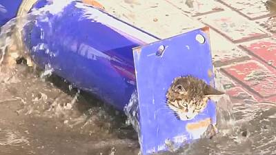 Chinese fire crew rescue stricken kitten from pipe