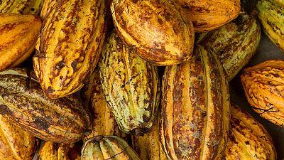 La Côte d'Ivoire lance un label pour son cacao