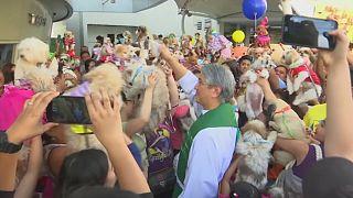 Animais de estimação abençoados em Manila