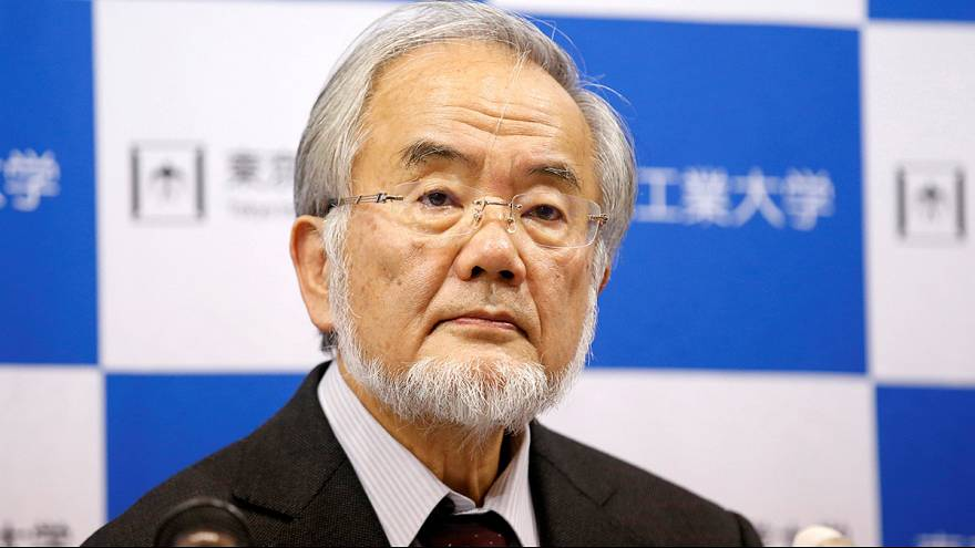 Yoshinori Ohsumi wins Nobel prize in medicine