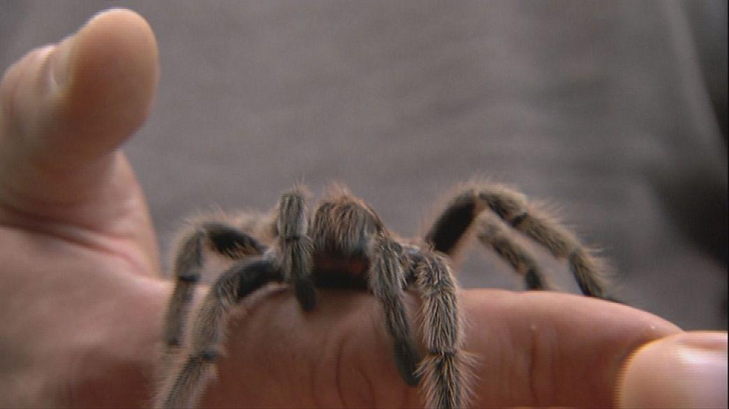 سم العناكب قد يقضي على أمراض فتاكة