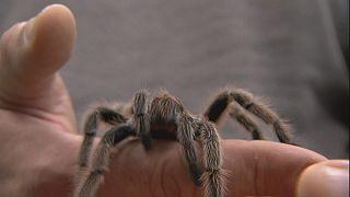 A pókméreg életet menthet